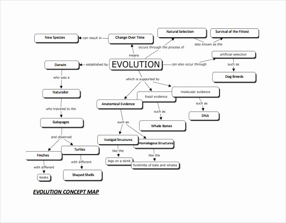 Concept Map Template Word Elegant Sample Concept Map Template 10 Free Documents In Pdf Word