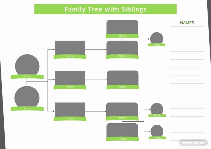 Family Tree Template with Siblings Fresh 34 Family Tree Templates Pdf Doc Excel Psd