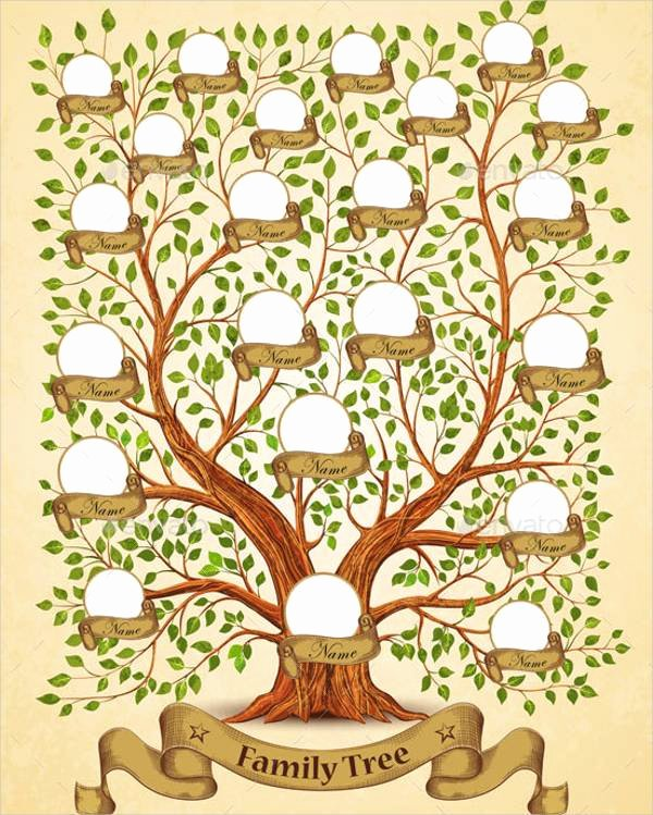 Family Tree with Pictures Template Lovely 51 Family Tree Templates Free Sample Example format