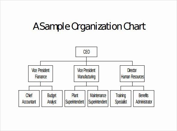 Non Profit organization Structure Template Beautiful Sample Blank organizational Chart 16 Documents In Pdf