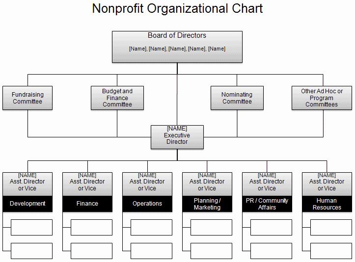 Non Profit organizational Chart Template Lovely Free organizational Chart Template Pany organization