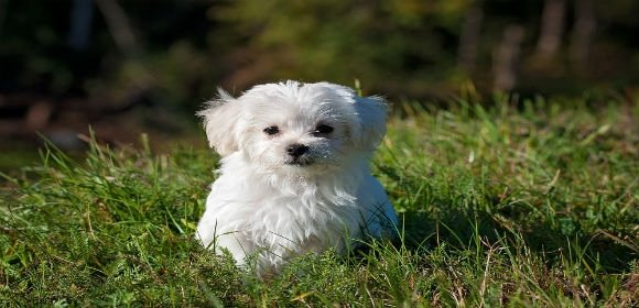 Puppy Sale Contract Template Awesome 8 Puppy Sales Contract Templates Word Google Docs