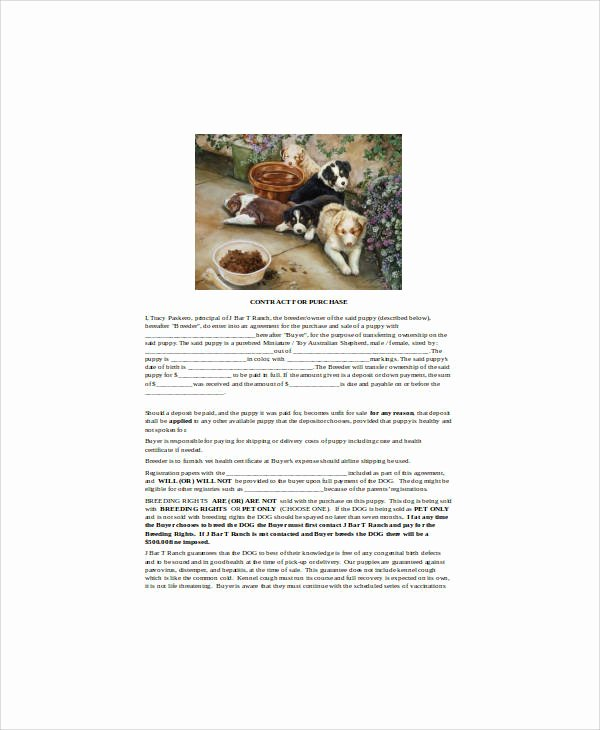 Puppy Sale Contract Template New Sample Puppy Sales Contract 8 Examples In Word Pdf