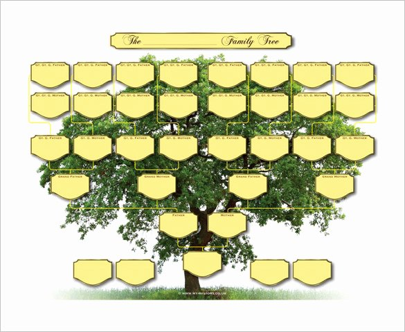 5 Generation Family Tree Template Fresh Five Generation Family Tree Template – 11 Free Word