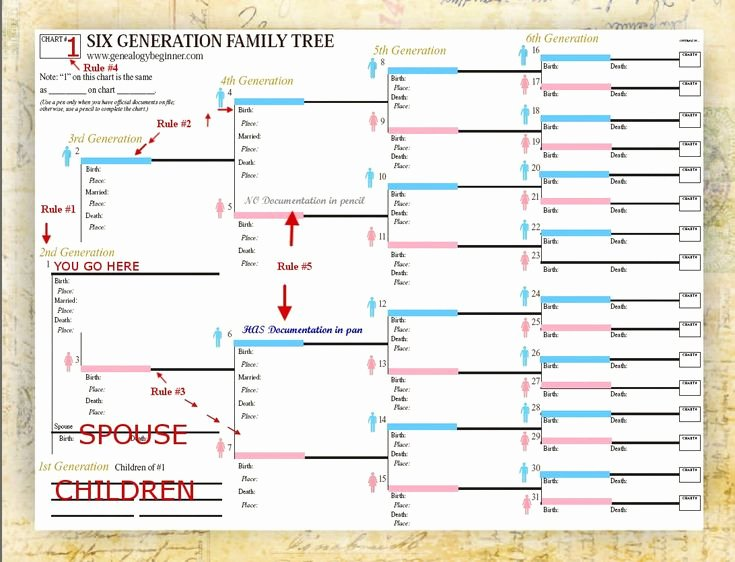 5 Generation Family Tree Template Luxury Use Smartdraw S Included Family Tree Templates to Easily