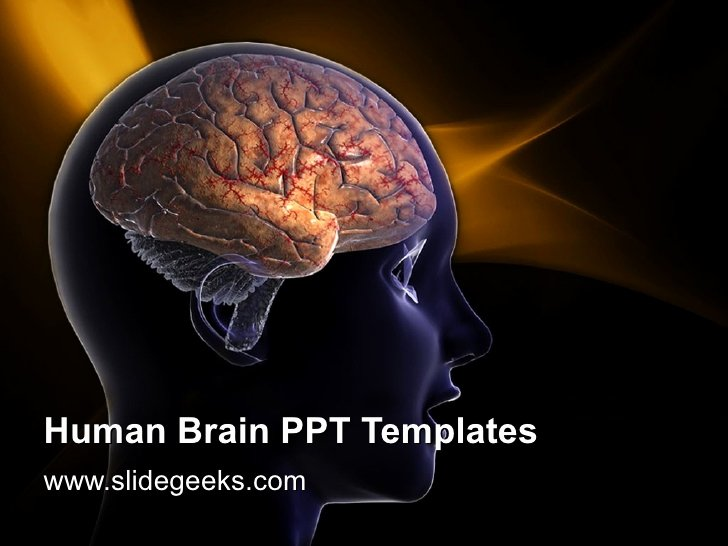 Brain Power Point Templates Beautiful Human Brain Ppt Templates