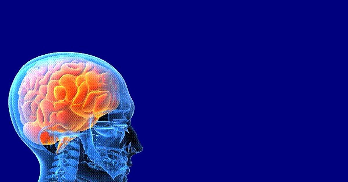 Brain Power Point Templates Unique Neurology Powerpoint Template 2 Free Medical Powerpoint