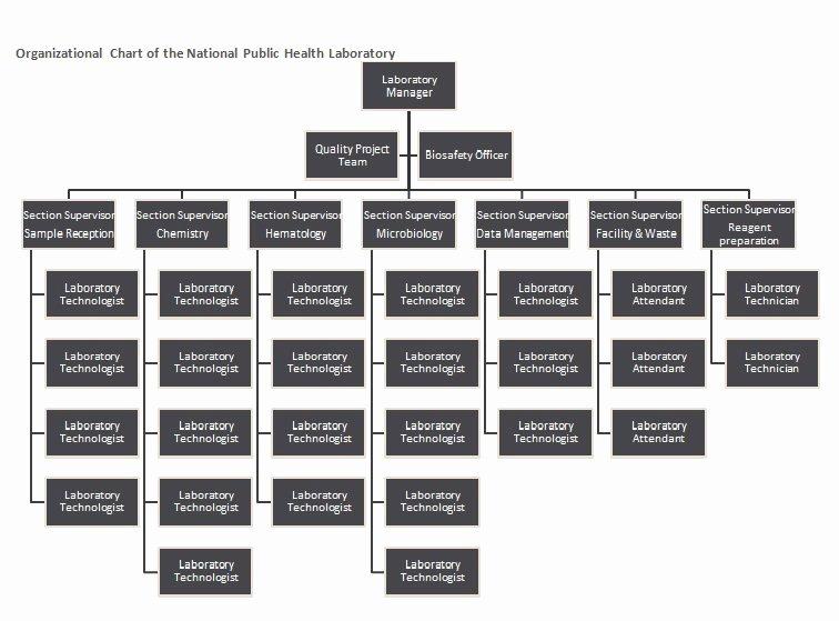 Project organization Chart Template Luxury 25 Best Free organizational Chart Template In Word Pdf Excel