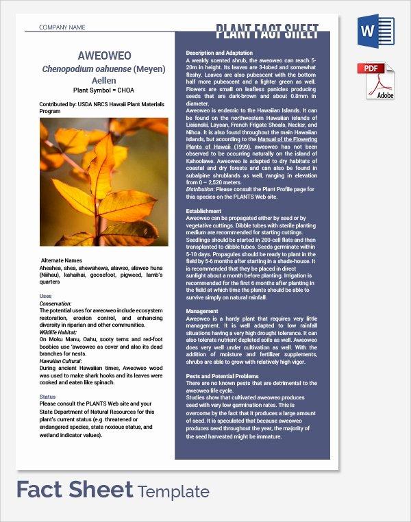 Sample Fact Sheet Template Inspirational Sample Fact Sheet Template 21 Free Download Documents
